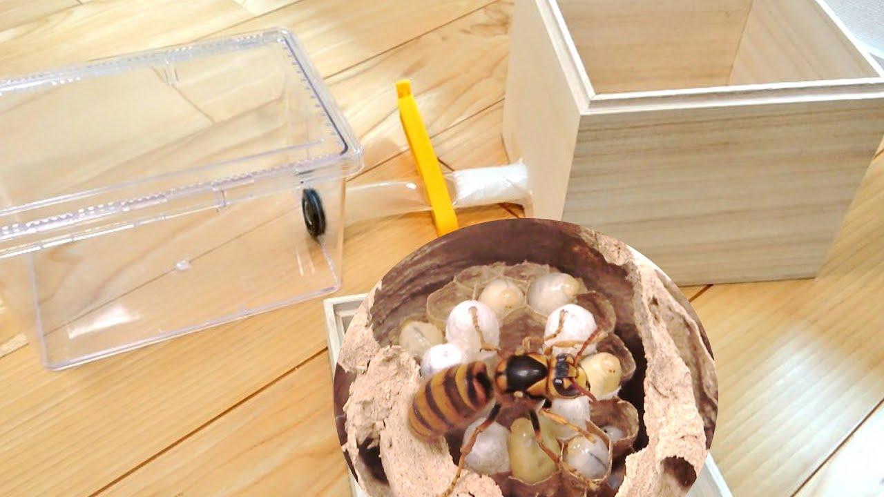 スズメバチの巣を室内で飼育する装置を作ってみた
