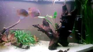 90 Gallon Planted Discus Tank Gdańsk