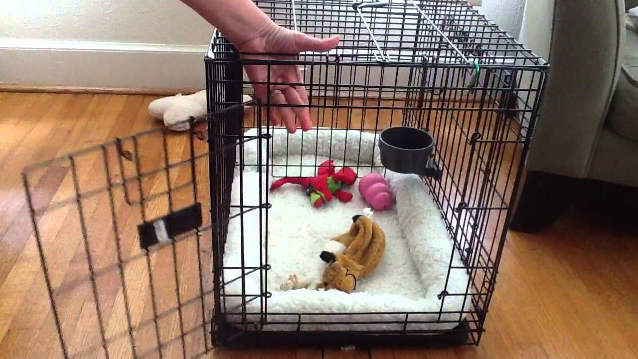 Top Paw Folding Double Door Crate Youtube