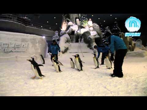 Snow Penguins Exercise