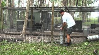 Easy Poor Man's Dog Or Fox Proof Fencing For Chicken Pen