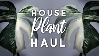 Plant Haul! | Variegated Monstera & Hanging Plants!