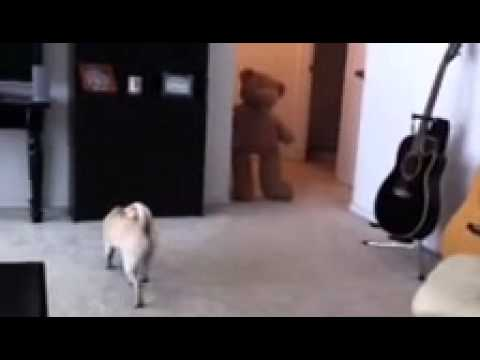 pug pooping scared the poop out of my pug youtube 7016