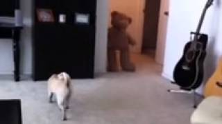 scared the poop out of my pug