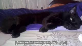 Кот дергается во сне )