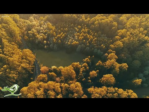 """Beautiful Relaxing Music: """"Early in the Morning"""" by Peder B. Helland (Official Video)"""