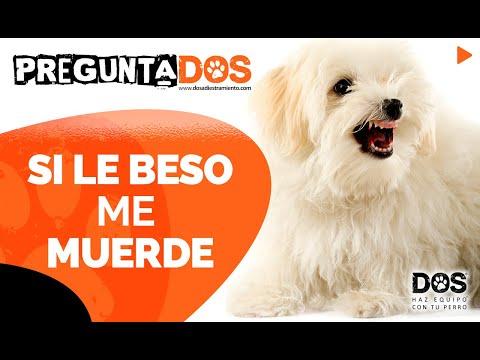 Perro me muerde cuando le beso 😟 | Consejos para educar perros 🐺📝