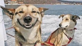 Забавные животные 😻 собаки 🐶 кошки и другие - Видео о жизни удивительных домашних животных 😇