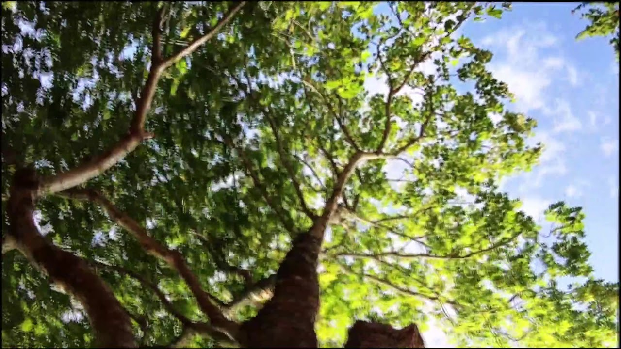 a tree but its sped up 10000%