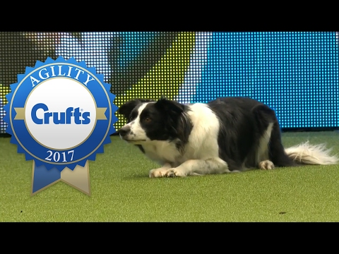 Agility - Kennel Club Novice Cup Agility Final (Part 2) | Crufts 2017