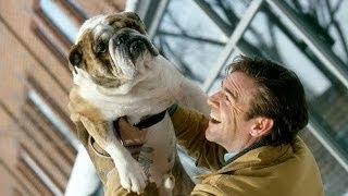How To Train Bulldog : How To Train Your English Bulldog