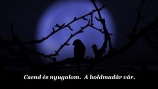 John Adorney : Waiting for the Moon / Várakozás a holdra (Magyar felirattal)