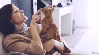 ЧТО НУЖНО ДЛЯ КОШАЧЬЕГО СЧАСТЬЯ  WHAT YOU NEED FOR THE CAT