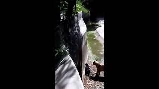 Pelajar di baham Harimau Bengal - Zoo, Delhi @ Student Mauled by Bengal Tiger