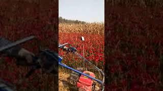 harvester machine for chilli