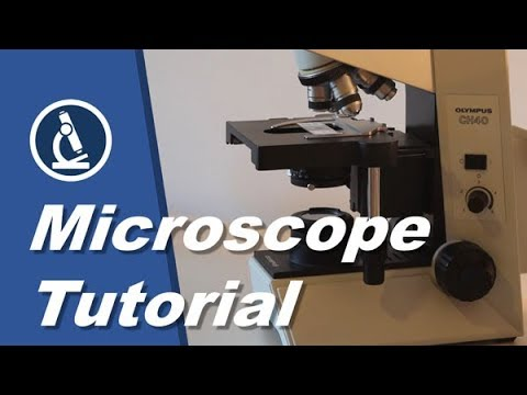 🔬 001 - Using a microscope  a how-to guide