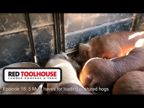 Ep 18: 5 Must Haves when Loading Pastured Hogs