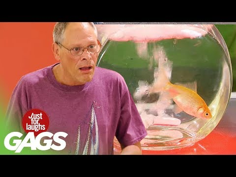 Pet Pranks | Best of Just For Laughs Gags