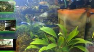 видео Как своими руками собрать фильтр для аквариума?