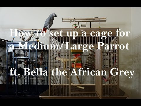 How To Set Up A Parrot Cage - Medium Or Large Sized Birds Ft. Bella The African Grey