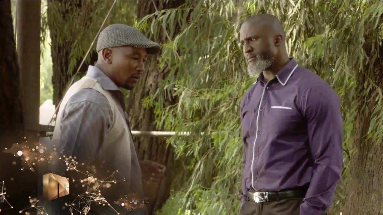 Download Two bulls in a kraal – Isibaya | Mzansi Magic