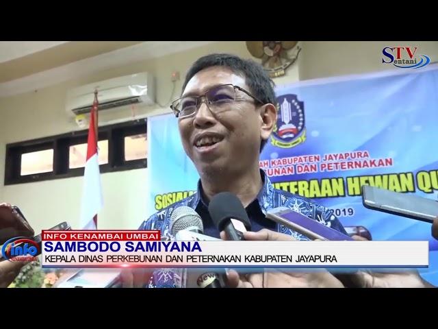 Sosialisasi Kesejahteraan Hewan kurban Oleh Pemerintah Kabupaten Jayapura | Sentani TV