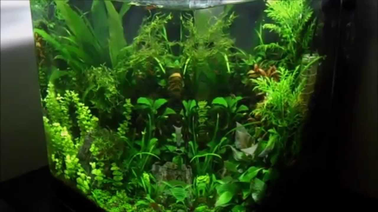 Nano cube dennerle 60l youtube for Aquarium nano cube