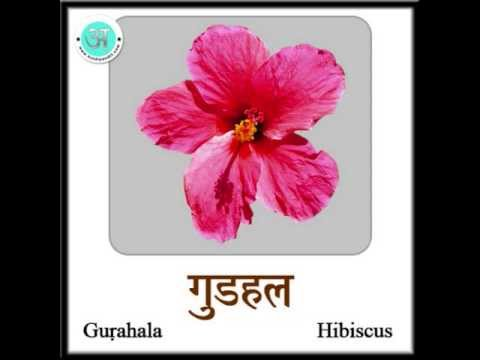 Learn Hindi Flowers English Youtube