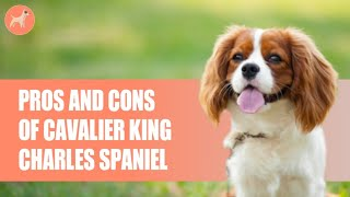 Cavalier King Charles Spaniel: Pros and Cons Of This Royal Breed