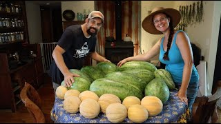 It's All About the Melons! Our Amazing Harvest!!