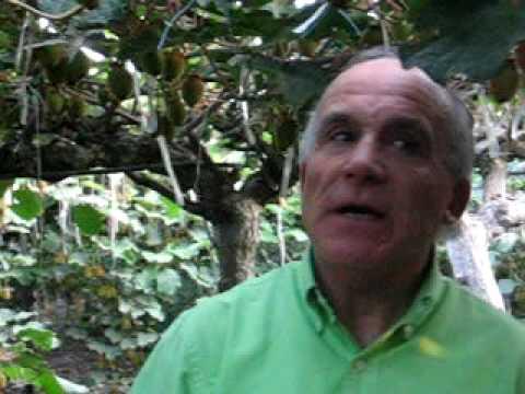 Testimonio del éxito en la aplicación de 3Tac en Kiwis