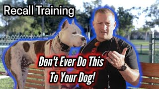 NEVER DO THIS to Your Dog After Calling Them! American Staffordshire Terrier