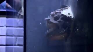 Trailer Piranha 3DD 2012 HD