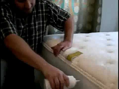 Bed Bugs Live Inside Mattress