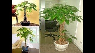 Cách trồng cây Kim Ngân - Ý nghĩa phong thủy của cây Kim Ngân bạn nên biết