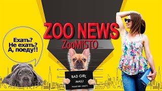 Собака-таксист и сосед-матершинник попугай амазон | Новости из мира животных #7 | ZooMisto