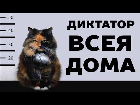 14 признаков, что кот тебя любит. Как кошки выражают чувства