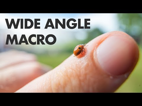 wide-angle-macro-photography!-laowa-15mm-f/4-lens-review