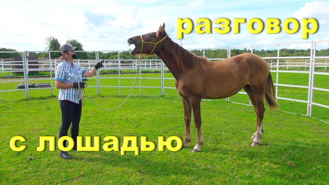 Как стать заклинателем лошадей? Открытый урок.