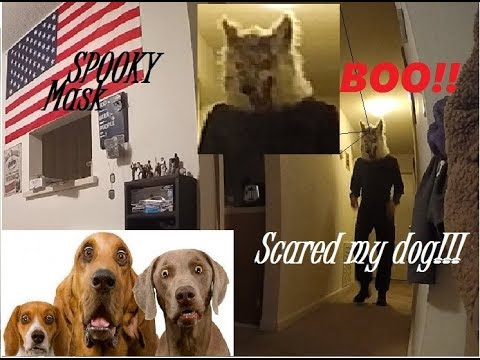 Scared dog and cat with Halloween mask!! Funny Prank!!
