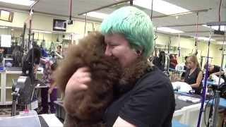 Take Paws: Grooming f๐r Pet Health with Gregg Docktor