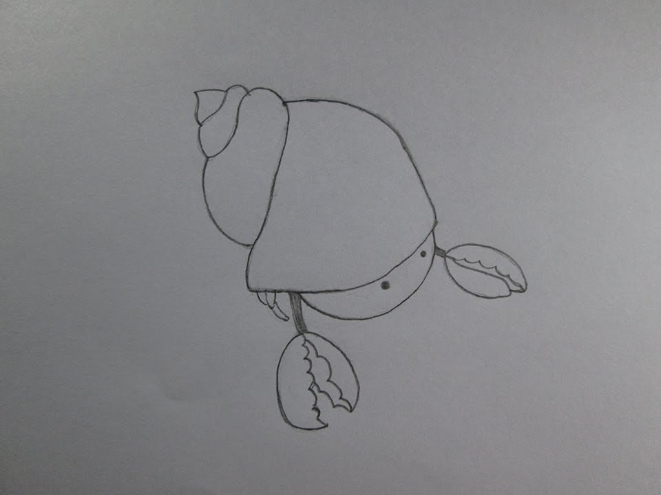how to draw a cute cartoon hermit crab