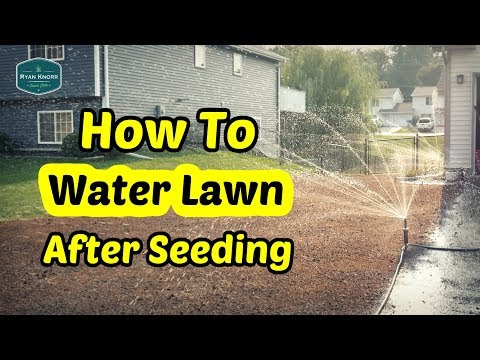How To Water Your Lawn After Seeding