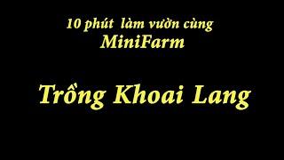 Trồng Khoai Lang - 10 Phút Làm Vườn Cùng MiniFarm