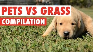 Pets vs Grass Funny Pets Compilation 2016