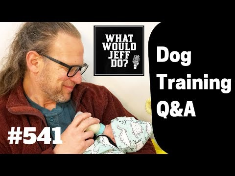 fighting-dogs-|-dog-poops-on-the-bed-|-what-would-jeff-do?-dog-training-q-&-a-#541