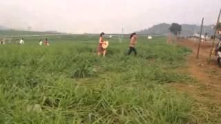 Cánh đồng cỏ tuyệt đẹp của th true milk ở nghệ an