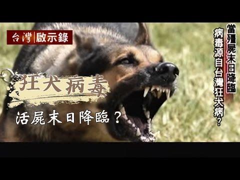 變種狂犬病毒來襲,活屍末日降臨?1030126 - 台灣啟示錄 - 台灣啟示錄