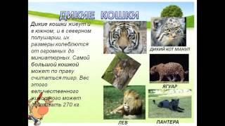 дикие и домашние животные 1 класс