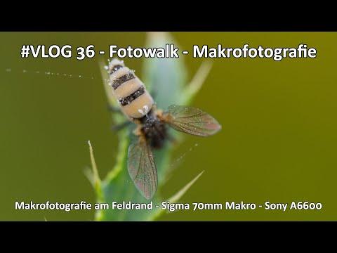 VLOG #036 - Lanschaftsfotografie - Makrofotografie - Morgendlicher Fotowalk am Feldrand - Sigma 70mm